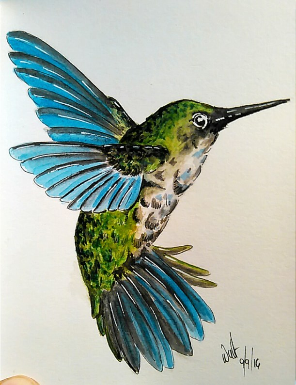Hummingbird Watercolor Painting by Walt Pierluissi - Doodlewash