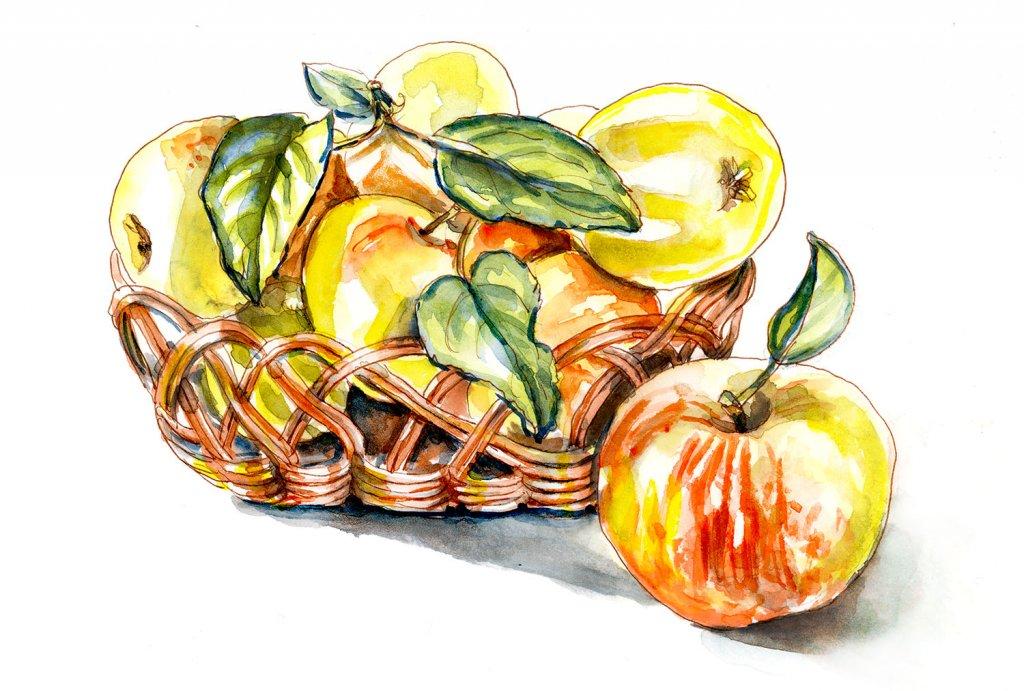 Day 1 - Picking Apples Watercolor - Doodlewash