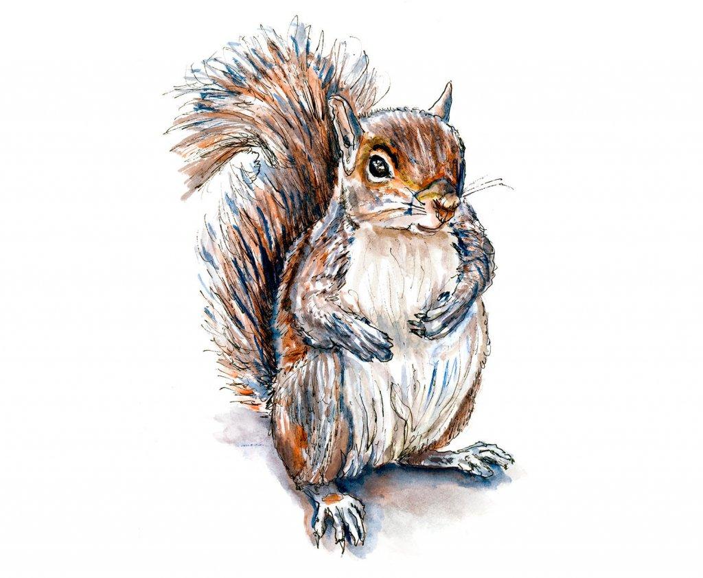 Day 16 - Squirrel Watercolor Inktober Drawing - Doodlewash