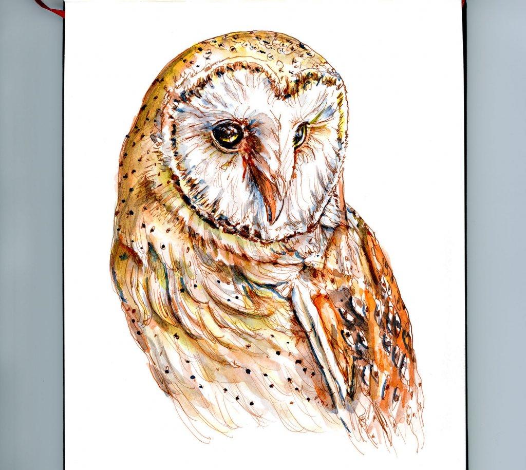 Day 19 - Barn Owl Watercolor Painting - Doodlewash