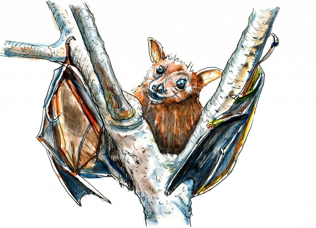 Day 29 - Bat Inktober Watercolor - Doodlewash