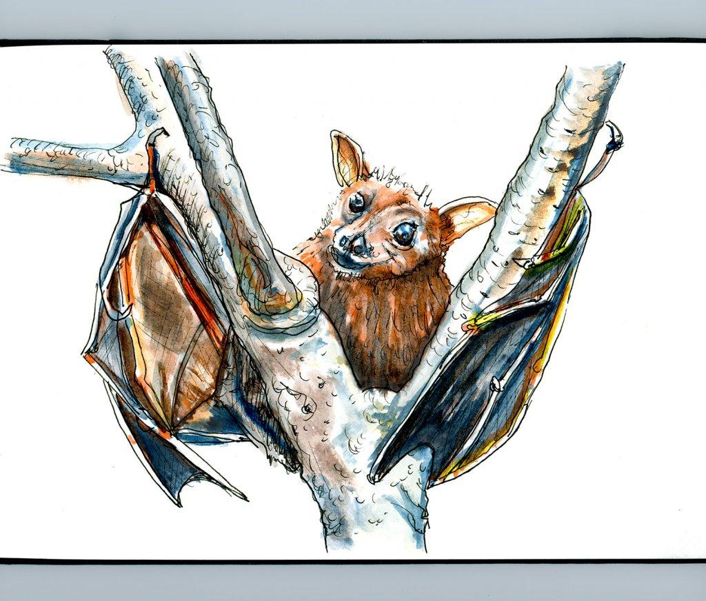Day 29 - Bat Inktober Watercolor Sketchbook - Doodlewash