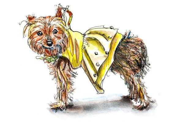 Day 30 - A Dog In Costume - Doodlewash