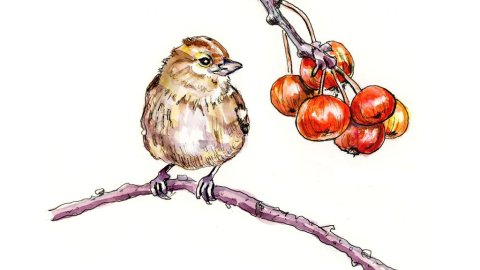 Day 7 - Bird And Berries Watercolor Ink Inktober - Doodlewash
