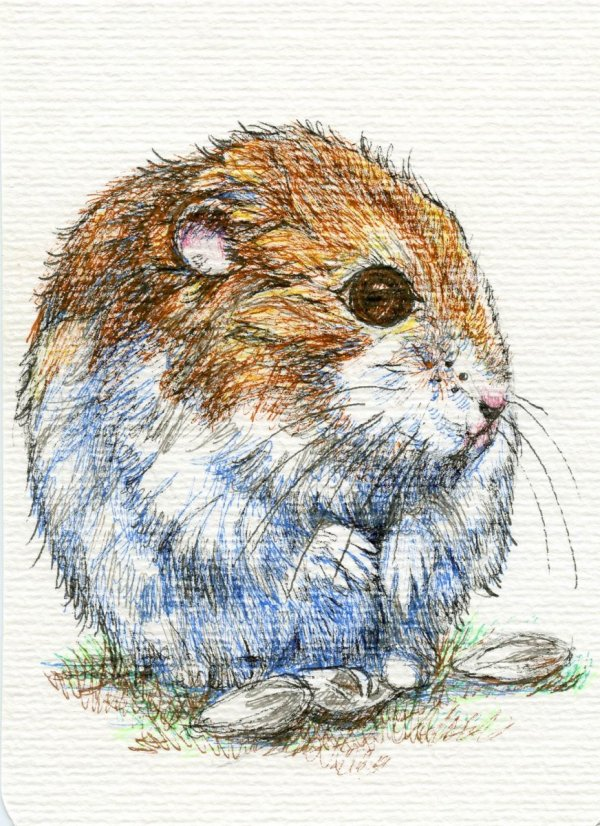 How to Draw A Hamster - Final Image - Doodlewash