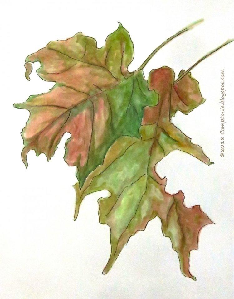 Sugar maple leaves in the rain. IMG_6802