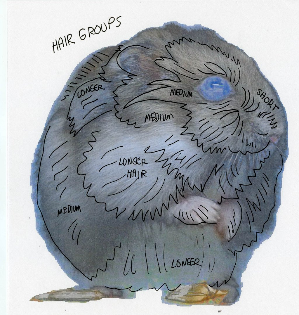 How To Draw A Hamster - Basic Hair Groups Drawing Fur - Doodlewash