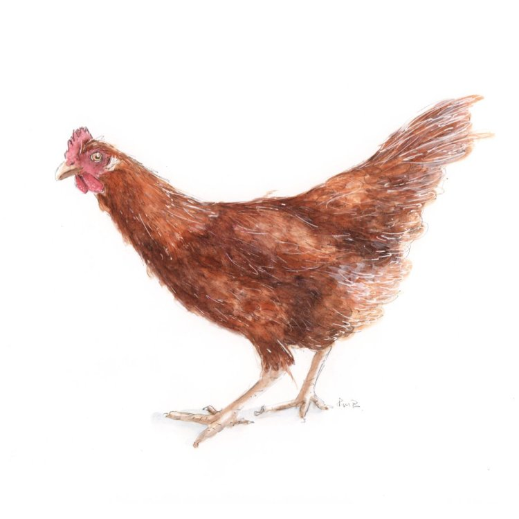 Eggbertabrown C85DC2FB-9B67-430A-8C77-05F9613E8F9D
