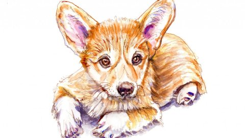 Day 14 - Corgi Puppy Watercolor Pet Portrait - Doodlewash