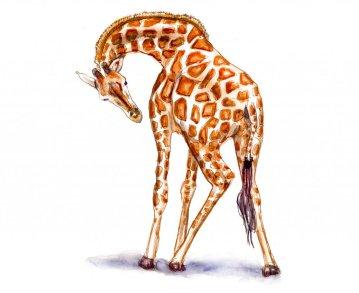 Day 16 - Giraffe Watercolor Full Body Sketchbook - Doodlewash
