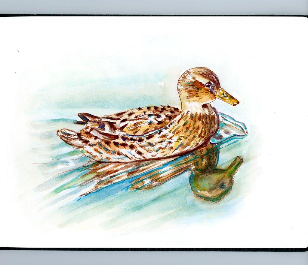 Day 17 - Duck Watercolor Reflections Sketchbook - Doodlewash