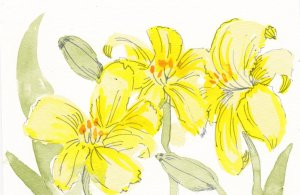 Watercolour flowers. Ink linework. Day 3 Lilies editedDay 4 Geranium editedDay 5 Irises editedDay 7