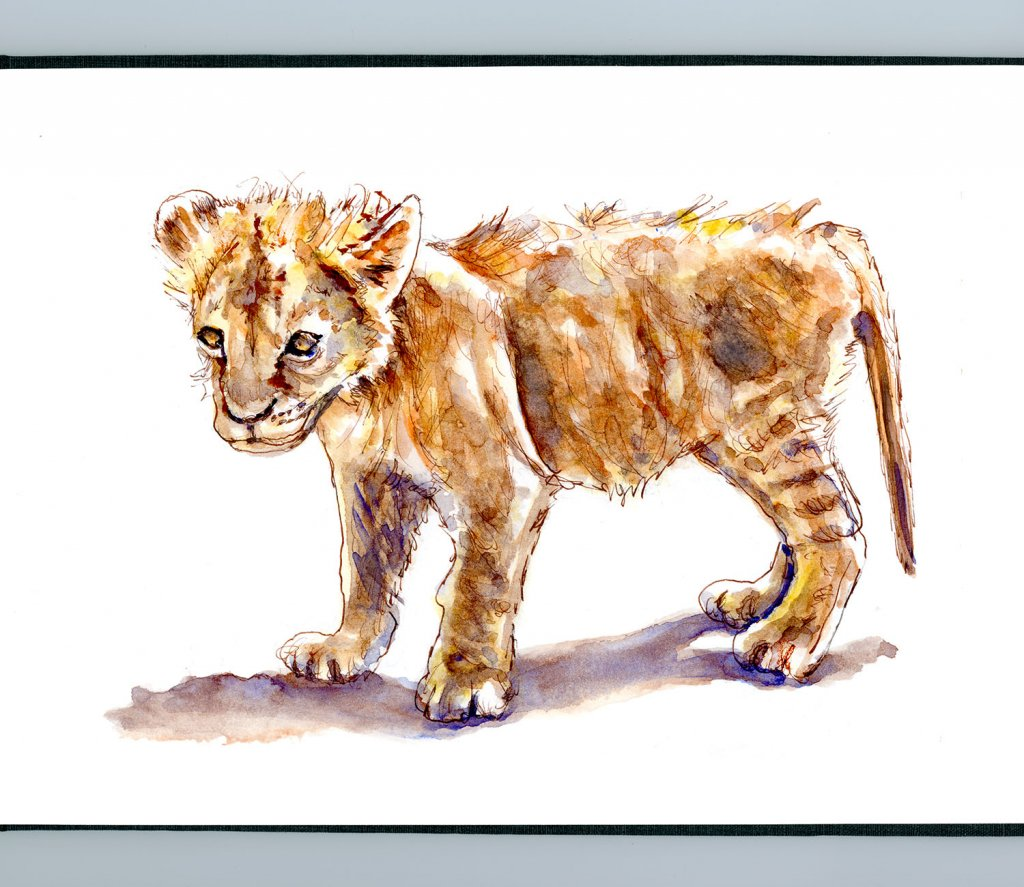 Day 30 - Lion Cub Watercolor Courage Sketchbook - Doodlewash
