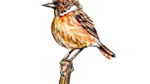 Day 8 - Baby Robin Learning To Fly Main - Doodlewash