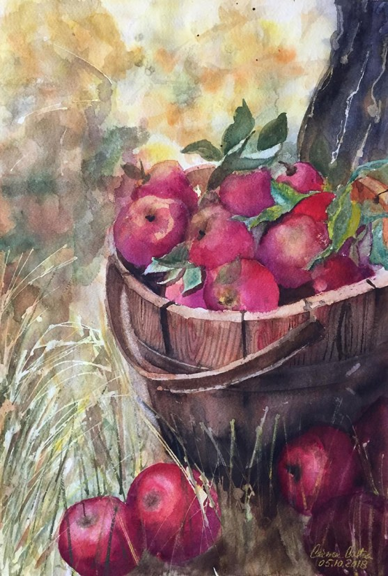 Bucket Of Apples Watercolor by Carmen Costea - Doodlewash