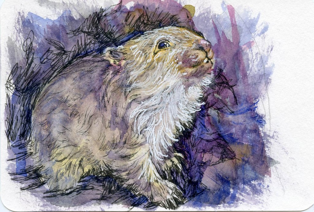 #PostcardsForTheLunchBag – Did you know that even though the Wombat has square poop? I acciden