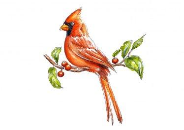 Day 8 - Cardinal Christmas Red Bird On Tree Branch - Doodlewash