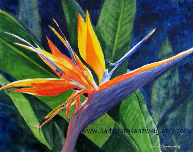 Bird Of Paradise Watercolor by Barbara Rosenzweig - Doodlewash