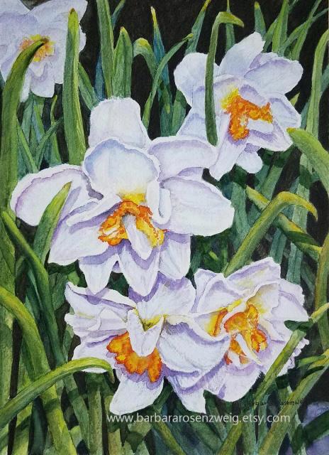 Daffodil Watercolor by Barbara Rosenzweig - Doodlewash