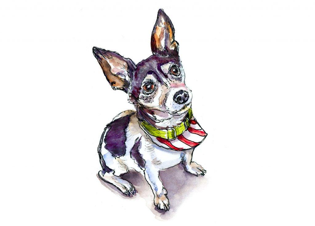 Day 20 - Christmas Dog Out Pet Portrait Watercolor - Doodlewash