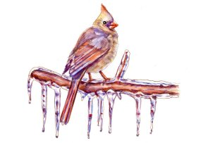 Day 30 - Female Cardinal Bird Icicles Watercolor - Sketchbook Detail - Doodlewash