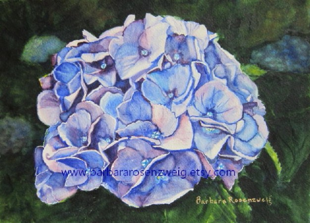 Blue Hydrangea Watercolor by Barbara Rosenzweig - Doodlewash
