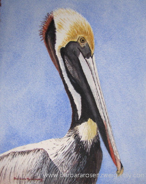 Brown Pelican Watercolor by Barbara Rosenzweig - Doodlewash