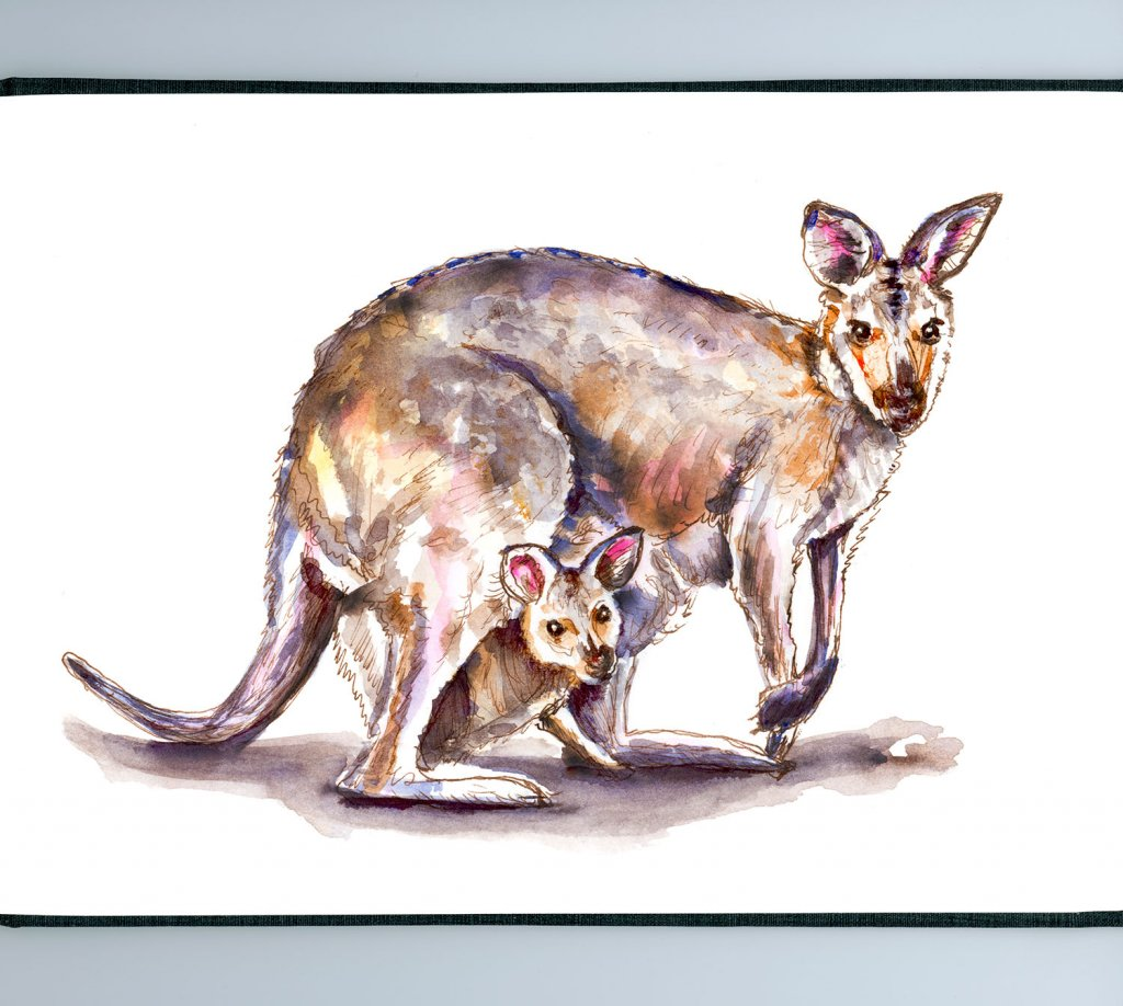 Day 1 - Wallaby And Baby Watercolor - Sketchbook Detail - Doodlewash