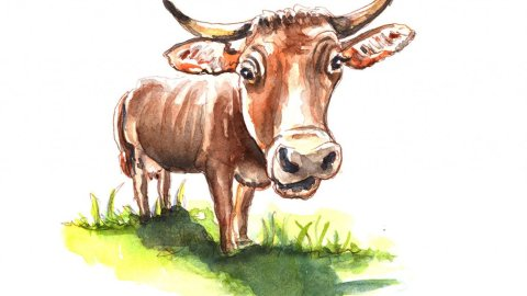 Day 26 - Bull Cow Farm Animals Watercolor - Doodlewash