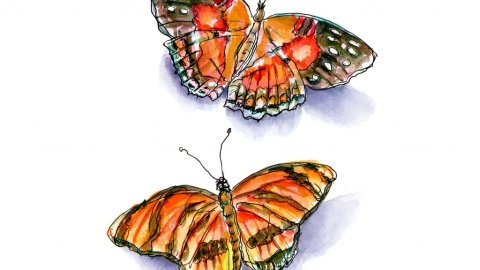Day 30 - Butterflies Watercolor - Doodlewash