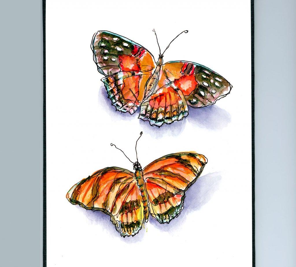 Day 30 - Butterflies Watercolor - Sketchbook - Doodlewash