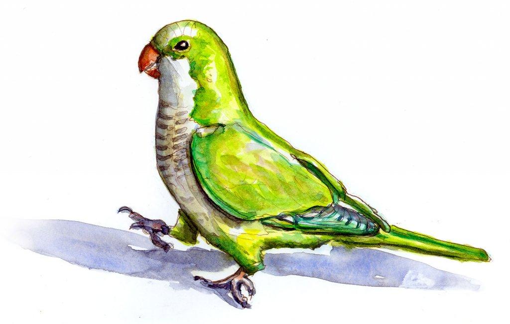 Day 8 - Parrot Watercolor Illustration - Doodlewash