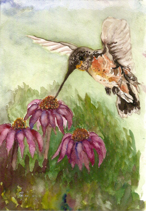 Early painting of a hummingbird and cone flowers coneflower-feeding-hummer