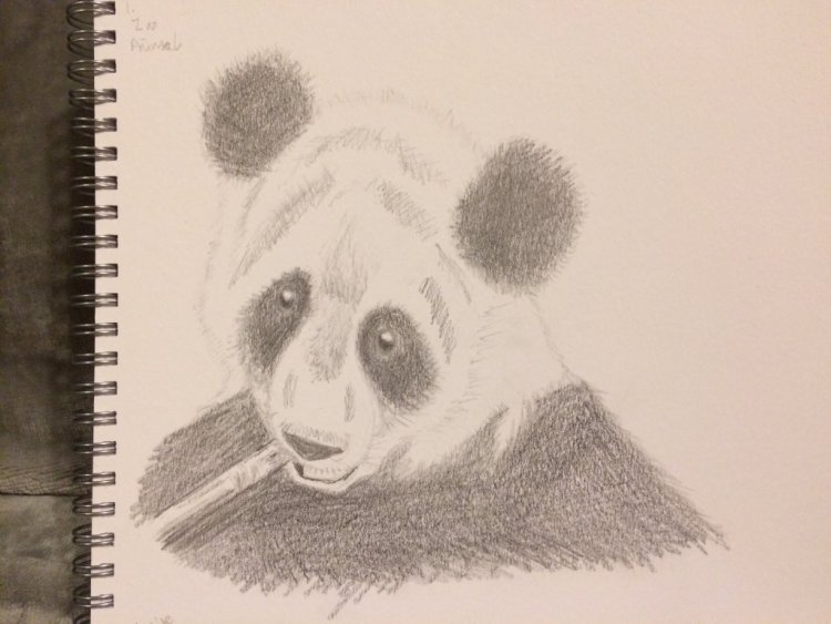  Panda – Zoo animal For day 1! It needs a bit more work on the shading but here's t