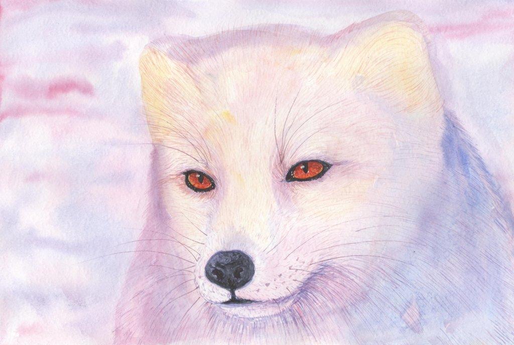 Arctic fox #watercolor 13