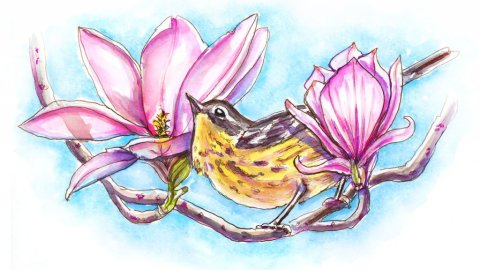Day 10 - Magnolia Warbler And Flowers Blooms - Doodlewash