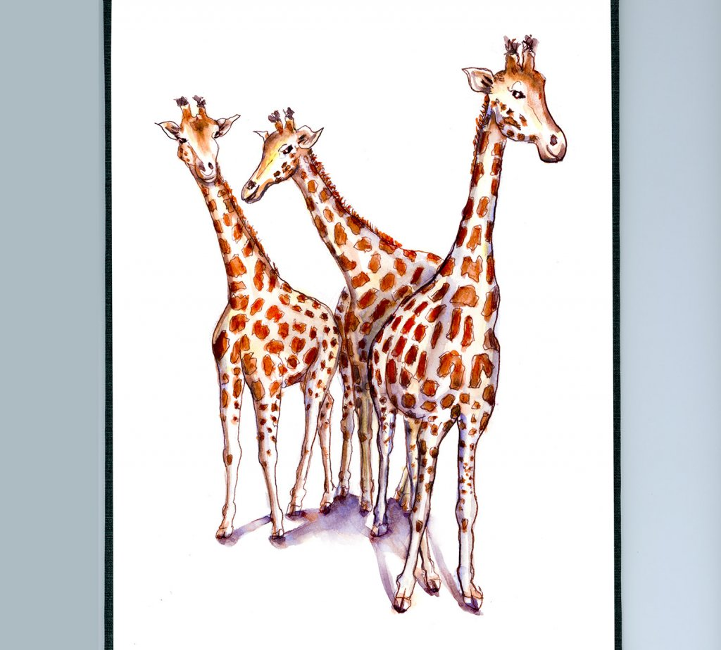 Three Giraffes Watercolor Sketchbook - Doodlewash