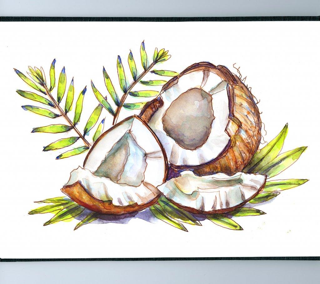 Day 19 - Coconuts Watercolor Sketchbook Detail