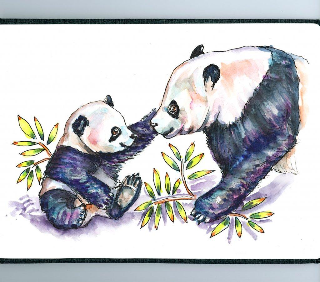Baby Panda And Mother Watercolor - Sketchbook Detail