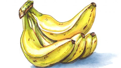Day 25 - Bananas Watercolor - Doodlewash