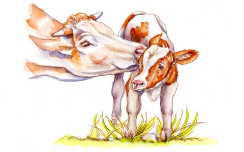 Day 27 - Cow And Calf Watercolor - Doodlewash