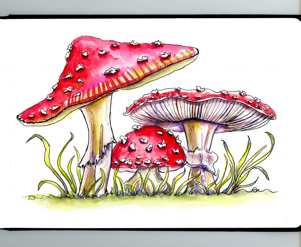 Day 4 - Fly Agaric Storybook Mushrooms Watercolor - Sketchbook - Doodlewash