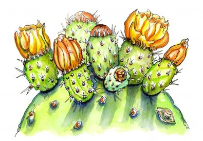 Day 6 - Cactus Watercolor Prickly Pear - Doodlewash