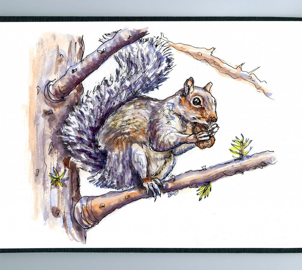 Day 9 - Squirrel Eating Nut Watercolor - Sketchbook Detail - Doodlewash