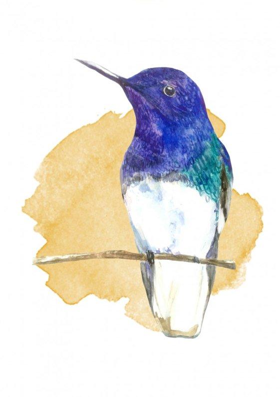 Watercolor Bird Front by Fatima Aslam - Doodlewash