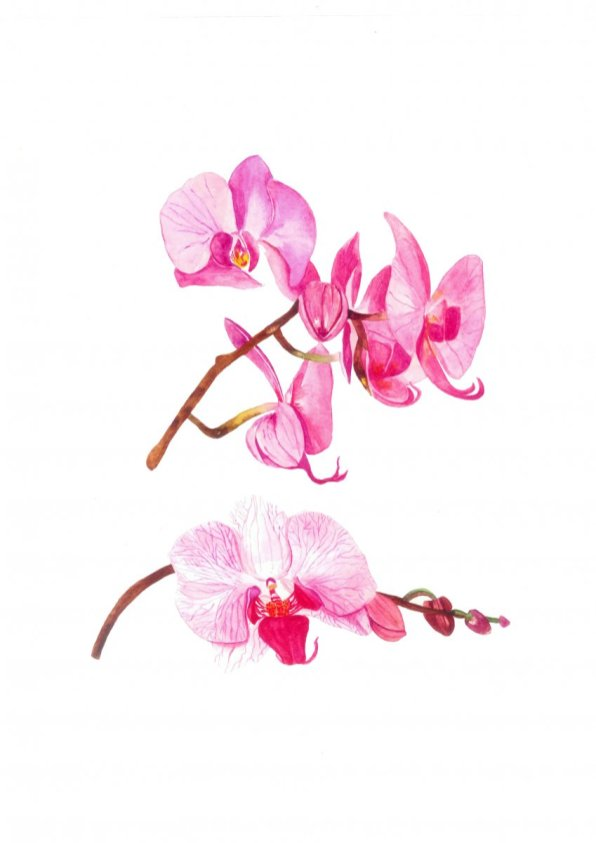Watercolor Orchids by Fatima Aslam - Doodlewash