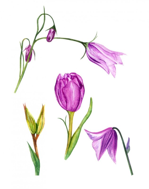 Watercolor Purple Flowers by Fatima Aslam - Doodlewash