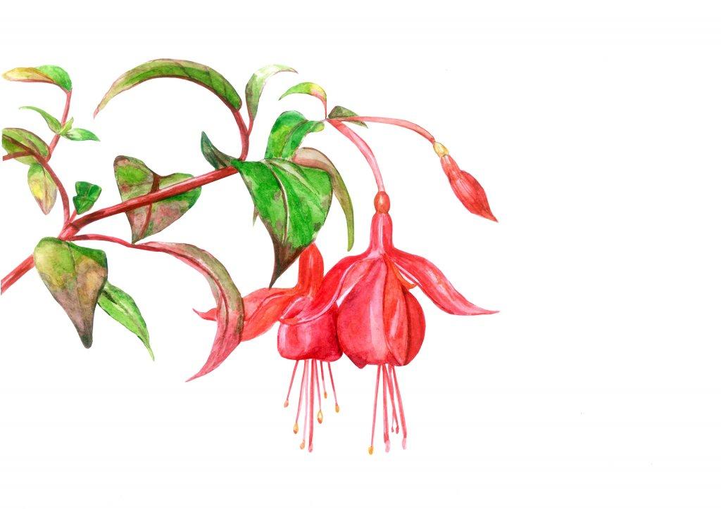 Watercolor Red Flowers by Fatima Aslam - Doodlewash