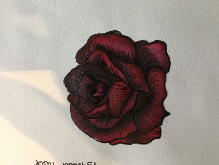 Défi 15 février # rose image
