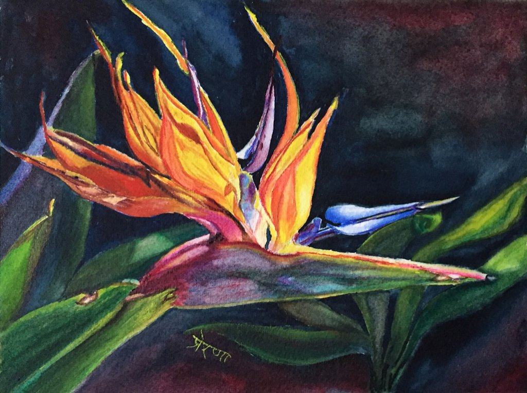 Bird Of Paradise Watercolor Painting by Prerana Kulkarni - Doodlewash